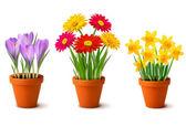 Primavera fiori colorati nel vettore di pentole — Vettoriale Stock