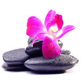 Spa Stones and Orchid flowers over white — Stock Photo