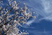 蓝蓝的天空和鲜花 — 图库照片