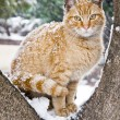 Homeless Cute Cat in the Snow - Stock Photo