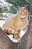 Homeless Cute Cat in the Snow — Stock Photo