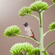Bird standing on a branch — Stock Photo