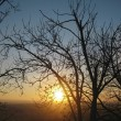 Stock Photo: Autumn sunset middle trees. Fall in Pyatigorsk