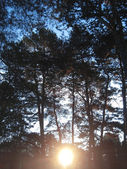 Sunrise in the winter forest. Caucaus nature — Stock Photo