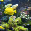 Tropical exotic fishes underwater on the bottom - Stock Photo