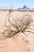 Saxaul i widok rock Sfinks w wadi rum deser — Zdjęcie stockowe