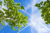 Spring blauwe hemel met witte wolk — Stockfoto