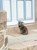 Dog waits near closed door — Stock Photo