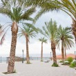 Palm trees in resort on Dead Sea — Stock Photo