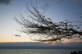 Tree brunch on Dead Sea sunset — Stock Photo