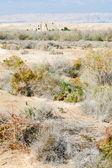церковь иоанна в пустыне земли палестины — Стоковое фото