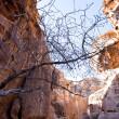Sand rock cliffs above gorge Siq in Petra — Stock Photo #9930124