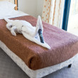Crocodile figure from towels on bed - Stock Photo