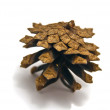 Stock Photo: Single pinecone