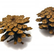 Pinecones close-up — Stock Photo