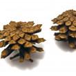 Pinecones close-up — Stock Photo