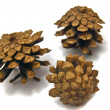 Three pinecones close-up — Stock Photo