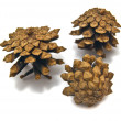 Pinecones on white - Stock Photo