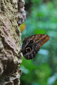 Butterfly sits on a rock — Stock Photo
