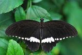 Schmetterling in großansicht — Stockfoto