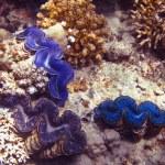 Three blue mussel — Stock Photo #9336709