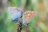 Two butterflies — Stock Photo
