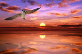 Seagull in the sunset — Stock Photo