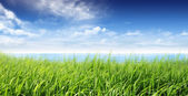 Ocean and grassland — Stock Photo