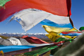 Tibet: tibetan prayer flags — Stock Photo