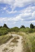 Cape cod: country dirt road — Stock Photo