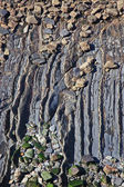 Flysch — Stock Photo