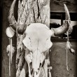 Cow skull — Stock Photo #7967511