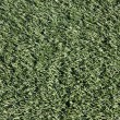 Close-up of Artificial Turf on Sports Field — Stock Photo