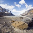 Stock Photo: AthabascGlacier