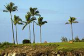 Maui Shoreline Park — Stockfoto