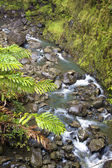 Tropical Stream — Stock Photo