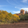 Cathedral Rock in Fall - Stock Photo