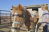 Young Girl Grooming Pony — Stock Photo