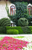 Wall of the house with an ivy and a flower bed — Stock Photo