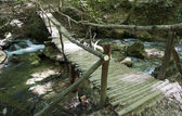 Timbered bridge through the river in wood — Stock Photo