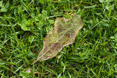 Leaf Vein — Photo
