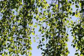 日光と葉 — ストック写真