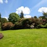 jardín de verano — Foto de Stock   #8029510