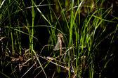 Dragonfly — Stock Photo
