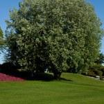 giardino — Foto Stock #8219961