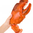 Lobster Claw — Stock Photo #8393962