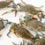 Blue Crab — Stock Photo