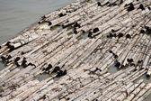 Lumber — Foto Stock