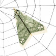 Spider Web and dollar — Stock Photo #9287016