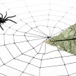 Spider Web and dollar — Stock Photo #9287019